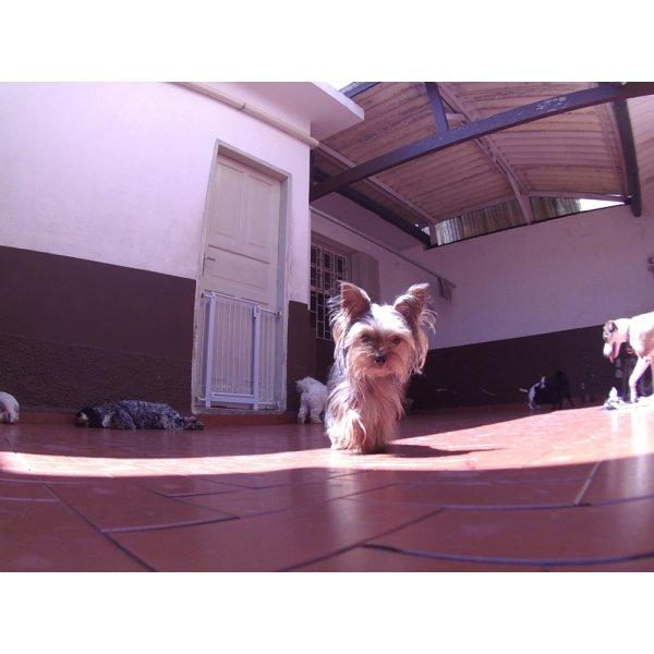 Onde Contratar Serviço de Day Care Canino no Jardim Progresso - Serviço de Daycare Canino
