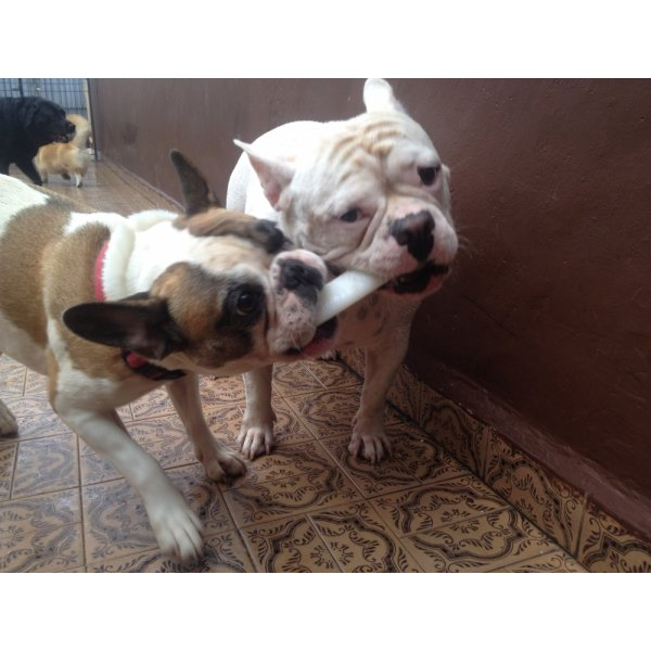 Onde Contratar Serviço Dog Sitter no Conjunto Residencial Glória - Empresa de Dog Sitter