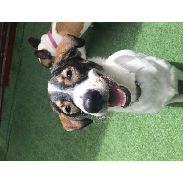 Onde Encontrar Passeador de Cachorro na Vila Jataí - Passeador de Cães SP