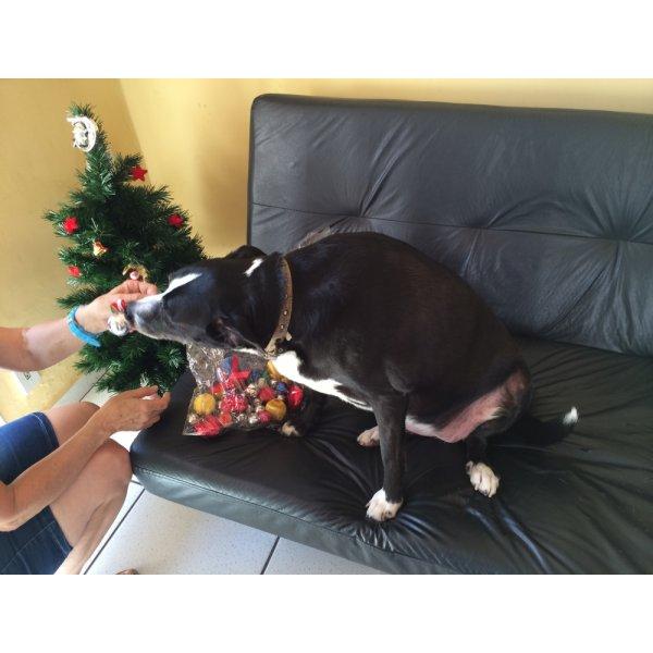 Onde Encontro Empresa de Adestradores de Cachorros na Vila Fernanda - Adestrador de Cães em São Bernardo