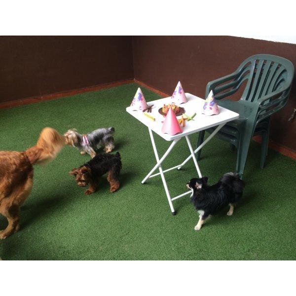 Onde Encontro Empresa de Adestradores de Cães no Jardim São Bento - Adestrador de Cães em São Bernardo