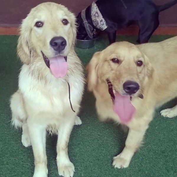 Onde Posso Contratar Dog Walker no Jardim Heliomar - Serviço de Dog Walker Preço