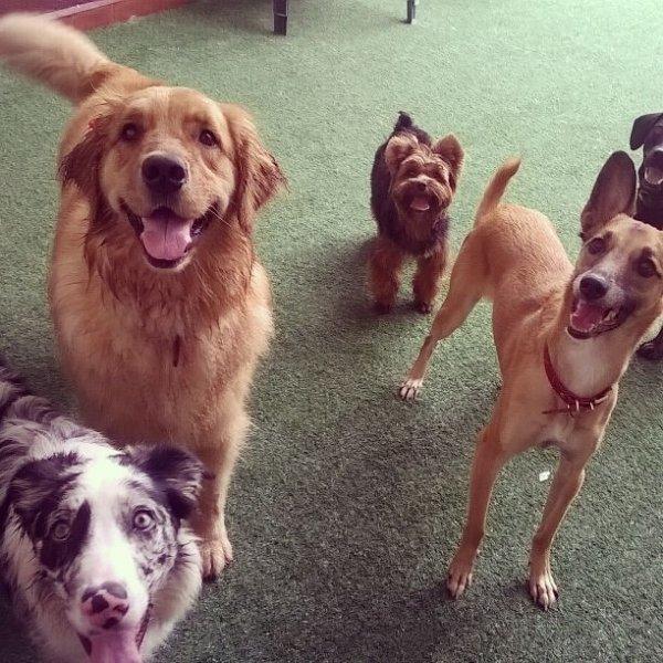 Onde Tem Adestrador de Cães no Jardim dos Jacarandás - Empresa de Adestradores de Cães