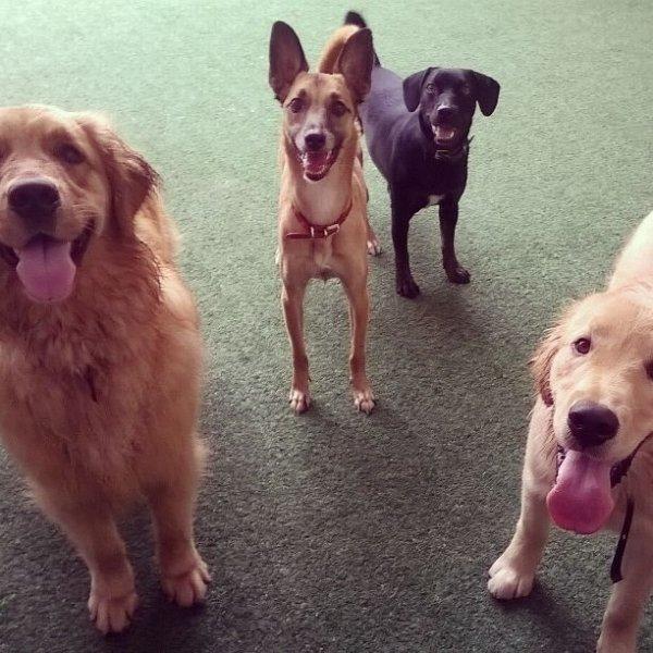 Onde Tem Dog Walker no Jardim Bom Clima - Dog Walker no Bairro Olímpico