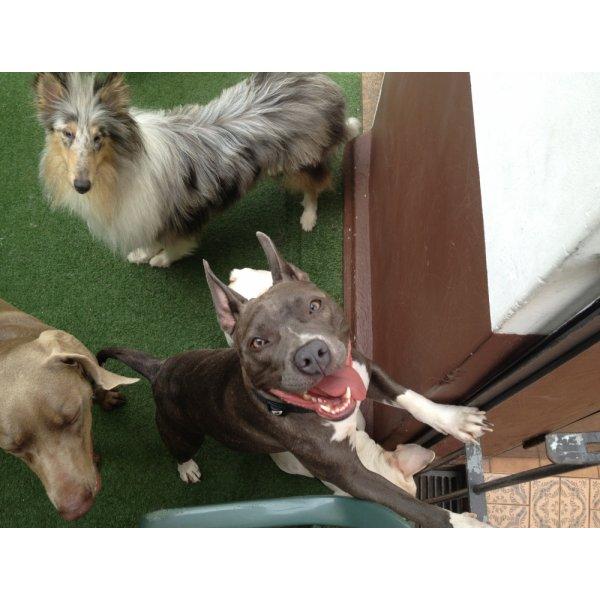Onde Tem Empresa de Adestradores de Cachorros no Aeroporto - Adestrador de Cães em São Bernardo