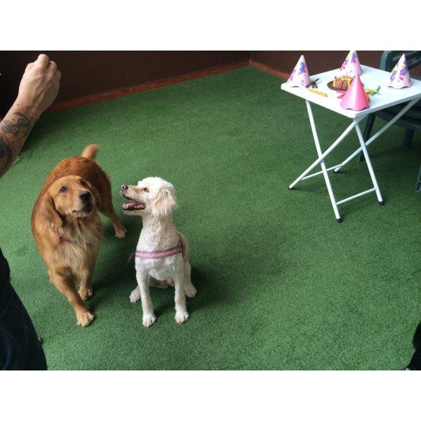 Onde Tem Empresa de Adestradores de Cães no Jardim Pinheiros - Adestrador de Cães em São Bernardo