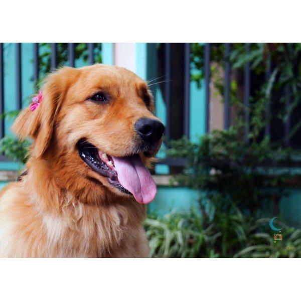 Onde Tem Empresa de Adestradores na Vila Sacadura Cabral - Adestrador de Cães em São Bernardo