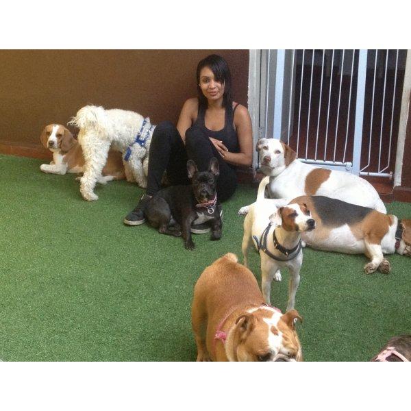 Onde Tem Hotéis para Cães no Jardim São Caetano - Hotel para Cães em São Caetano
