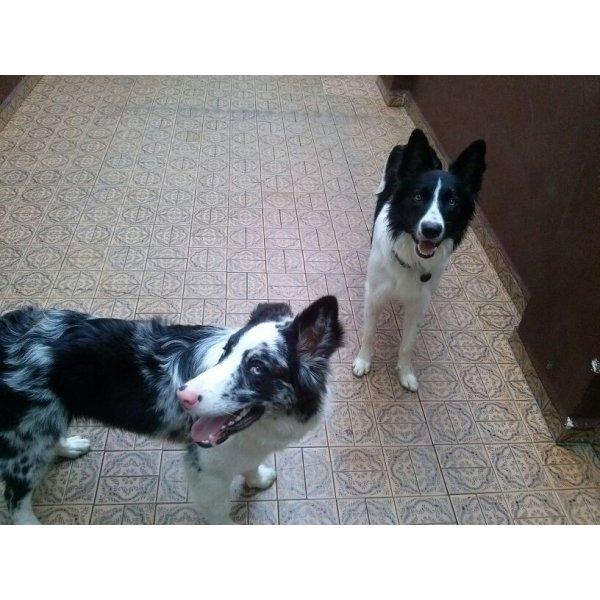 Onde Tem Hotel Dog no Jardim Bom Clima - Hotel Canil