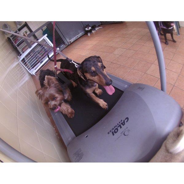 Onde Tem Serviço de Daycare Canino na Vila Pires - Daycare para Cães
