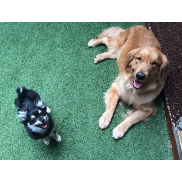 Passeador de Cachorro com Valor Bom em Utinga - Preço de Dog Walker