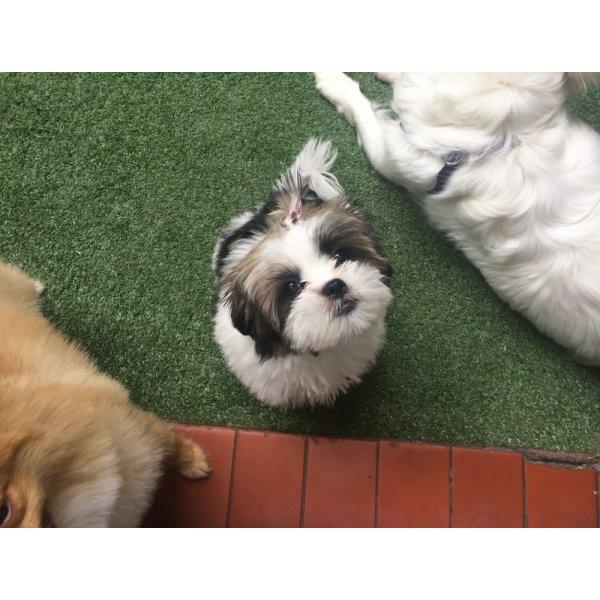 Passeador de Cachorro Como Contratar no Jardim Patente Novo - Dog Walker no Bairro Olímpico