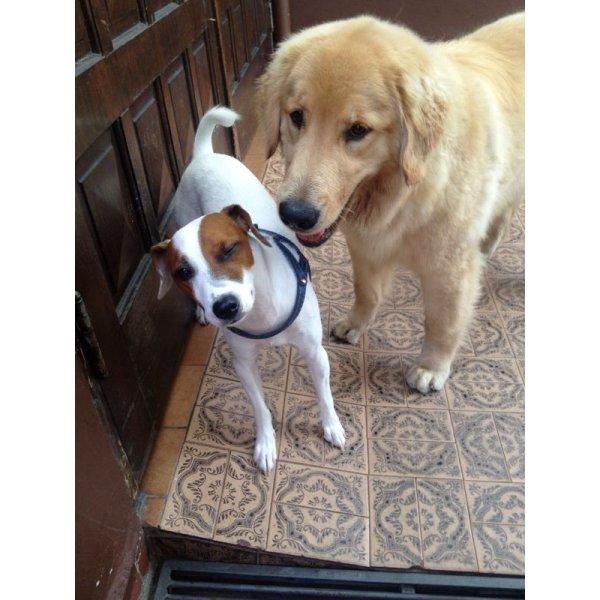 Passeador de Cachorro na Vila do Cruzeiro - Passeadores de Cães
