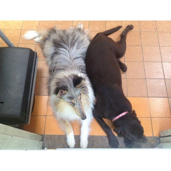 Passeador de Cachorro Onde Tem no Inamar - Passeadores de Cães