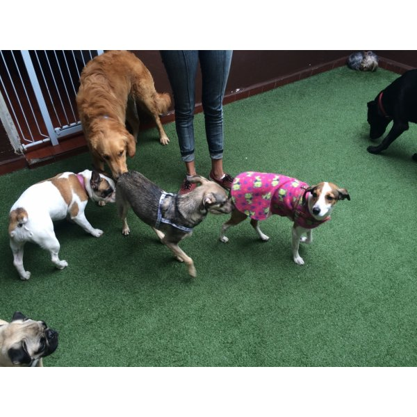 Passeador de Cachorro Preciso Contratar no Jardim das Bandeiras - Passeador de Cães SP