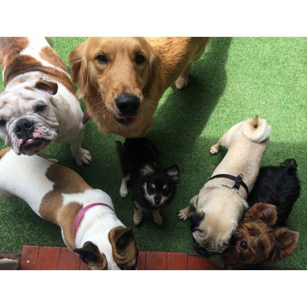 Passeador de Cachorro Quanto Custa na Vila Argentina - Dog Walker no Bairro Olímpico