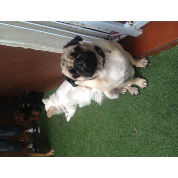 Passeador de Cachorro Valores em Cerâmica - Dog Walker no Bairro Olímpico