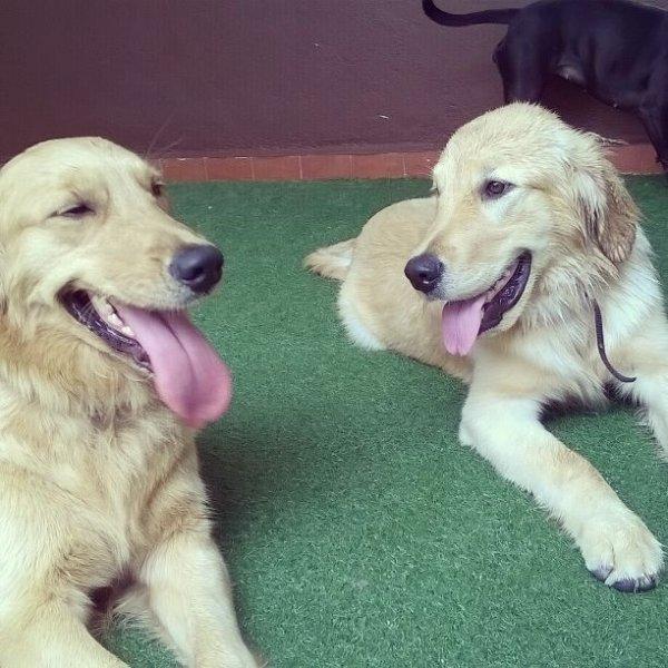 Passeador de Cães no Jardim Carla - Serviço de Dog Walker Preço