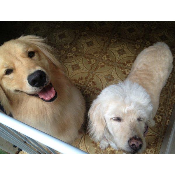 Passeador de Cães Onde Tem no Jardim Promissão - Serviço de Dog Walker Preço
