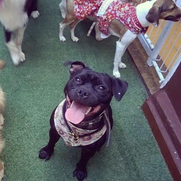 Passeador de Cães Preços na Chácara Itaim - Pet Walker Preço