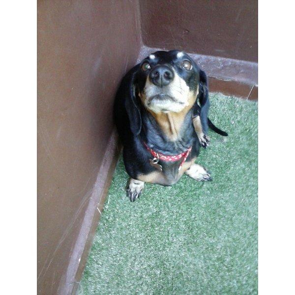 Passeador de Cães Quanto Custa na Vila São Pedro - Serviço de Dog Walker Preço
