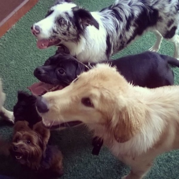 Passeador de Cães Valor no Jardim Guilhermina - Preço de Dog Walker