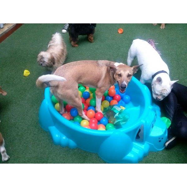 Passeadores de Cachorro Preços na Vila São Francisco - Passeador de Cães SP