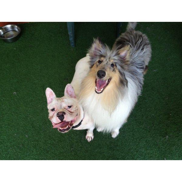 Passeadores de Cachorro Quanto Custa em Média na Vila Castelo - Dog Walker no Bairro Olímpico