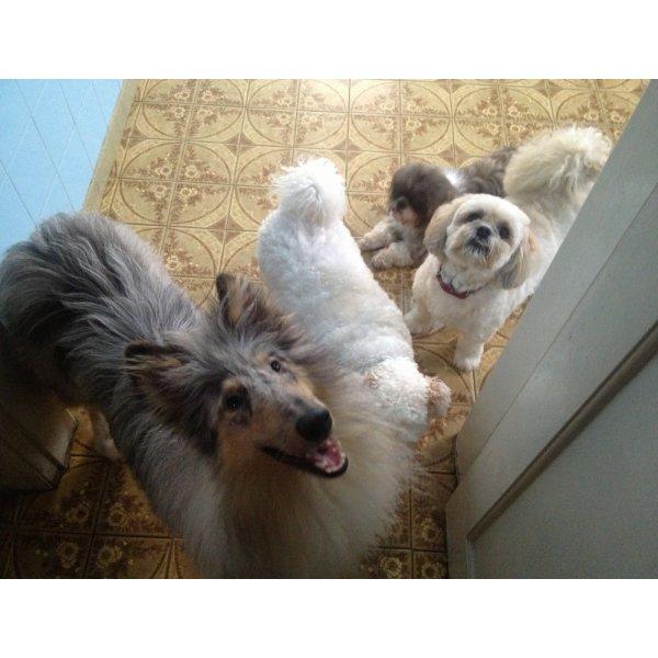 Passeadores de Cachorro Quanto Custa no Alto Santo André - Passeador de Cães SP