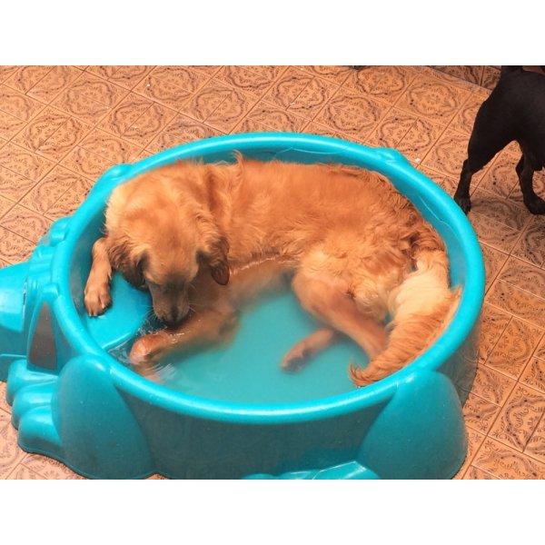 Passeadores de Cachorros Quanto Custa em Média no Jardim Magali - Passeador de Cães SP