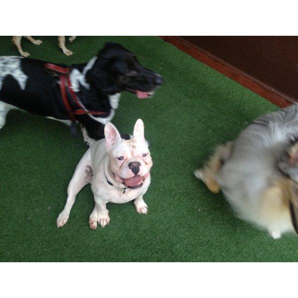 Passeadores de Cachorros Valor no Jardim Flórida - Passeador de Cães SP