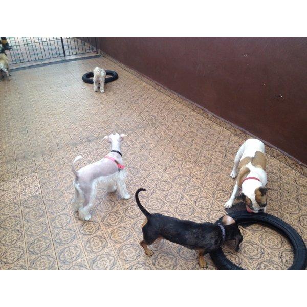 Pet Sitter Contratar na Eldorado - Babá de Cachorro