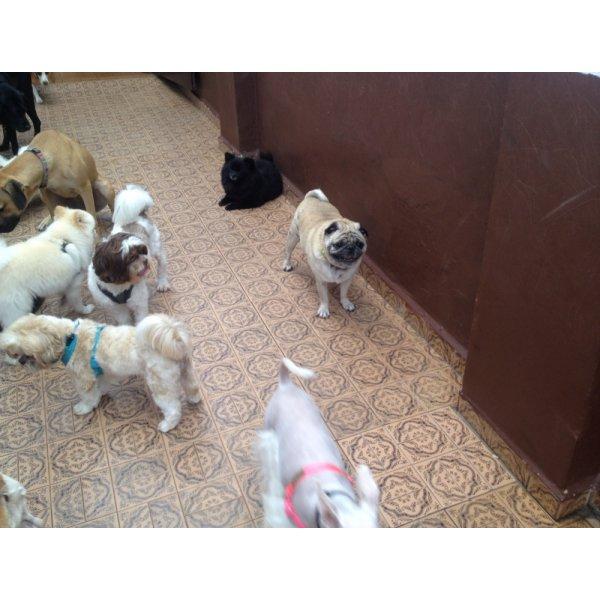 Pet Sitter na Vila Plana - Serviço Dog Sitter