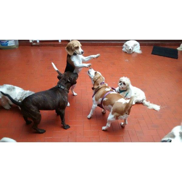Pet Sitter Onde Encontro na Granja Julieta - Serviço Dog Sitter