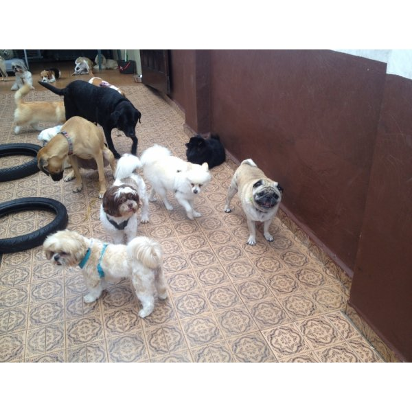 Pet Sitter Onde Tem na Chácara São Luiz - Serviço Dog Sitter