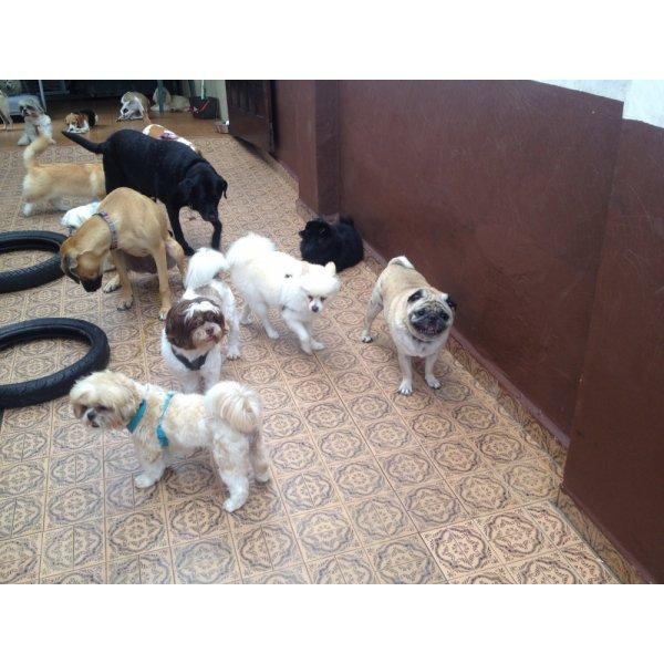 Pet Sitter Onde Tem no Parque do Pedroso - Babá de Cachorro
