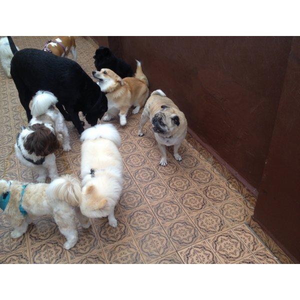 Pet Sitter Valor na Vila Príncipe de Gales - Serviço Dog Sitter