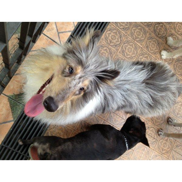 Preço Adestrador Canino na Vila Lutécia - Adestrador de Cães no Bairro Olímpico