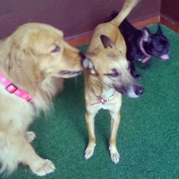 Preço Adestrador de Cães em São Judas - Adestrador de Cães na Rudge Ramos