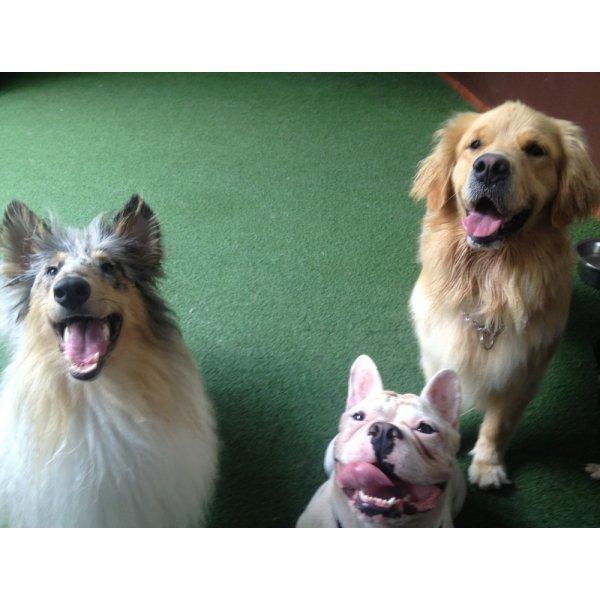 Preço Adestradores Profissionais na Nova Gerty - Adestrador de Cães em São Bernardo