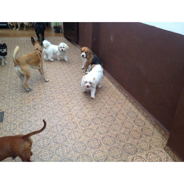 Preço Adestramentos de Cachorro no Real Parque - Adestramento de Filhotes
