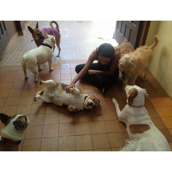 Preço da Hospedagem Canina na Cidade Mãe do Céu - Hotel para Cães no Bairro Olímpico