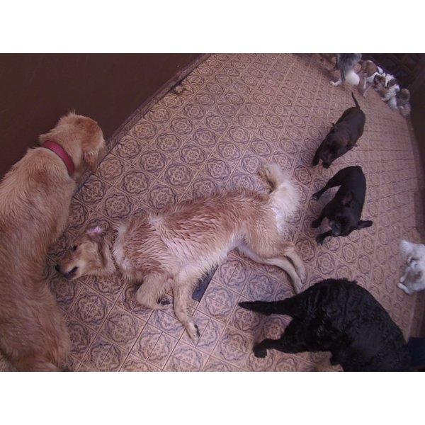 Preço Day Care Canino na Vila Nova Tupi - Serviço de Daycare para Cachorros