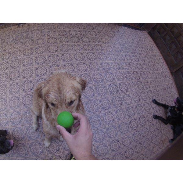 Preço Daycare Cachorro na Luz - Dog Care