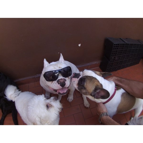 Preço Daycare Pet no Alto da Boa Vista - Daycare para Cães
