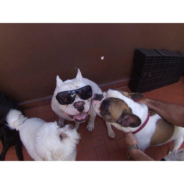 Preço Daycare Pet no Jardim Stella - Day Care Canino