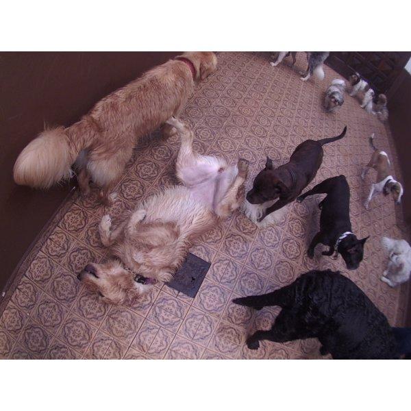 Preço de Day Care Canino no Bairro Silveira - Dog Care