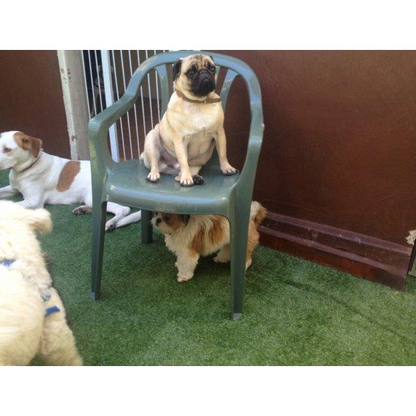 Preço de Hospedagem Canina no Parque Gerassi - Hotelzinho de Cães
