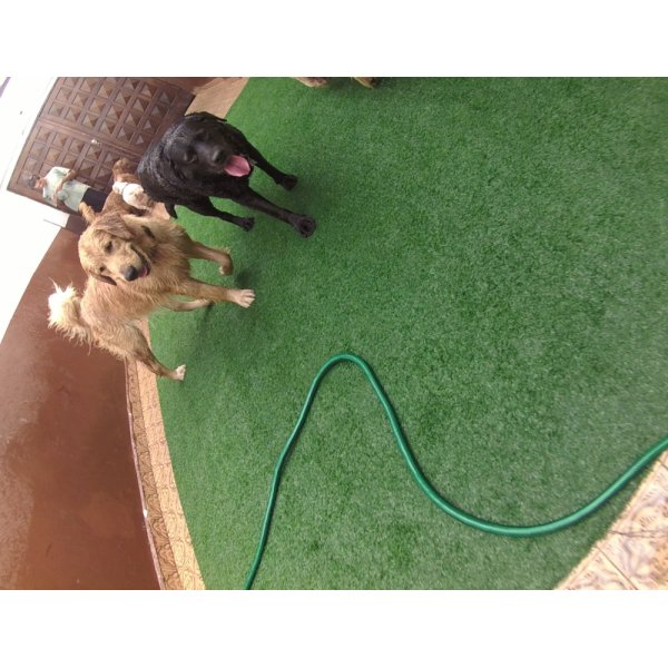 Preço de Serviço de Daycare Canino no Jardim Paulistano - Daycare Dogs