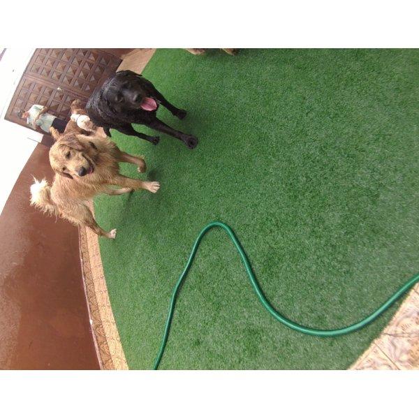 Preço de Serviço de Daycare Canino no Real Parque - Day Care para Cães